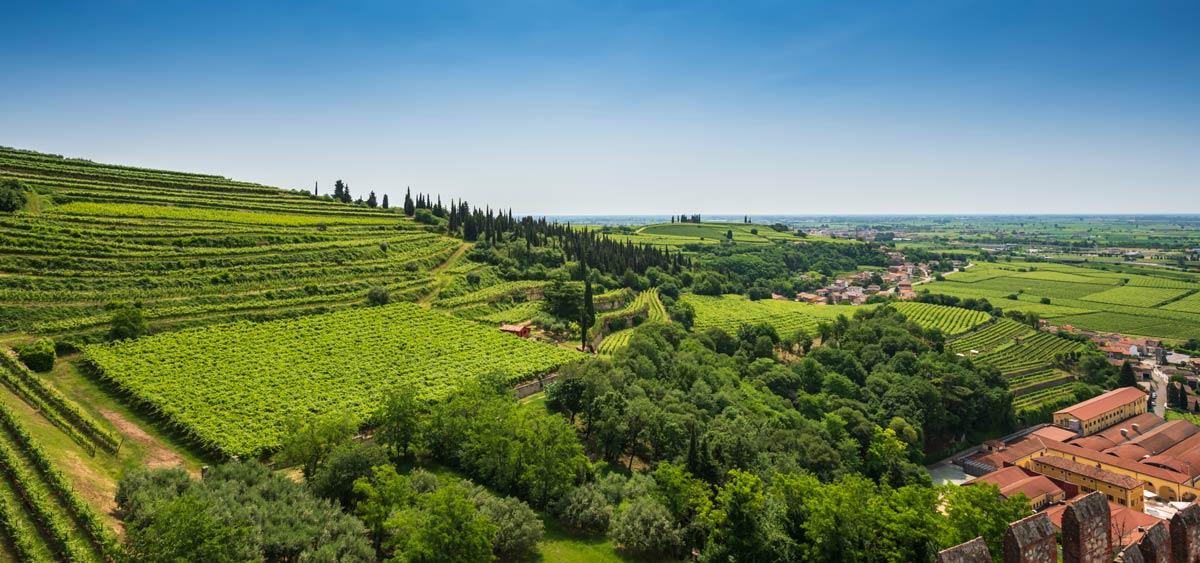 Вид на виноградники Соаве